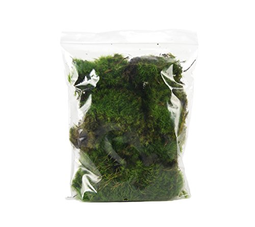 Fresh Mood Moss (2 Quart Bag) by Josh's Frogs