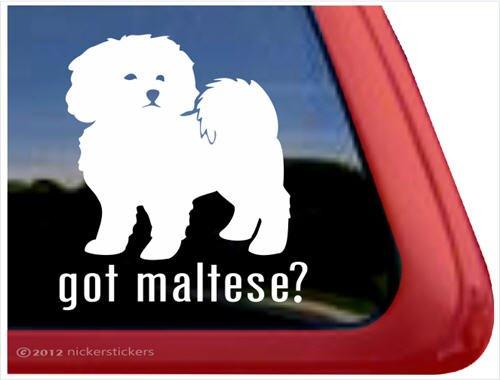 Got Maltese? ~ Cute Puppy Dog Vinyl Window Decal (Got Maltese)