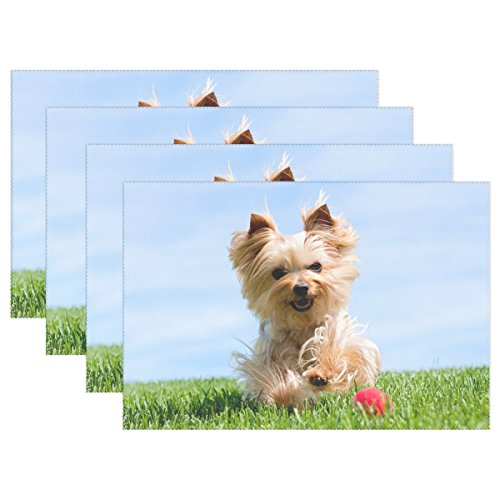 Terrier Mix Puppy - QYUESHANG Animal Dog Yorkshire Terrier Yellow Mix Small Fluffy Puppy Adorable Heat-resistant Table Placemats Set Of 4 Stain Resistant Table Mats Washable Eat Mat Home Dinner Decorative