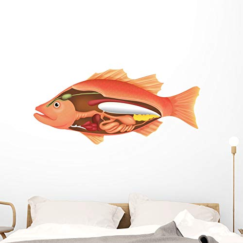 Wallmonkeys Anatomy Fish Wall Decal Peel and Stick Animal Graphics (48 in W x 23 in H) WM29340