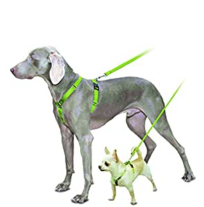 PetSafe Grande Sure Fit arnés: Amazon.es: Productos para mascotas