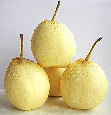 GEOPONICS Chinee blanco Pera Nahi pera Ya pera Pearple Pyru Bretchneideri semillas 10 PC: Amazon.es: Salud y cuidado personal