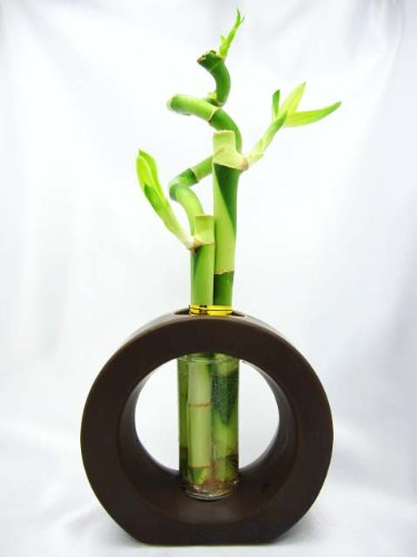 9GreenBox-Live-Spiral-3-Style-Lucky-Bamboo-Plant-Arrangement-with-Ceramic-Vase-Brown