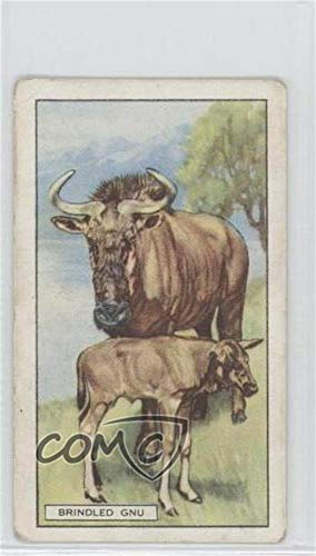 The Brindled Gnu Ungraded COMC Good to VG-EX (Trading Card) 1937 Gallaher Wild Animals - Tobacco [Base] #36 from Gallaher Wild Animals