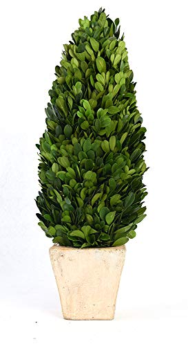 BoxWoodLand Real Boxwood Plant Wreath, Ball, Cone Tree, Wedding Home Decoration, Realistic Full Green Plant, Indoor Décor(Cone Tree, 16'')