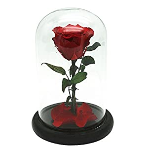 Janedream Preserved Fresh Rose Flower with Box 100% Real Rose Enchanted Rose Gift Ideas for Valentine's Day, Anniversary, Birthday 2