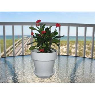 9GreenBox - Red Crown of Thorns Plant - Euphorbia splendens - 4