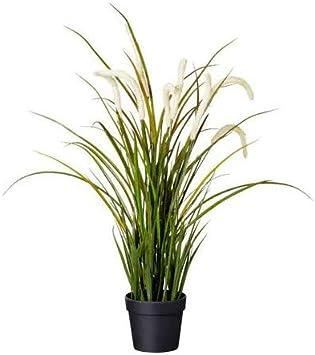 Ikea 204 339 36 Fejka Topfpflanze Kunstlich Drinnen Draussen Dekoration Gras 9 Cm Nicht Angegeben Amazon De Baumarkt