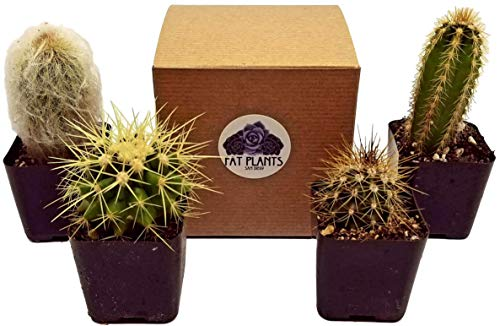 Fat Plants San Diego Mini Cactus Plants in Plastic Planters by Fat Plants San Diego