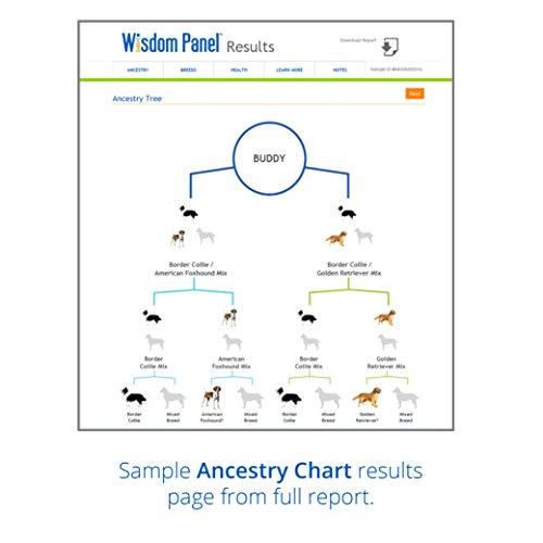 wisdom panel 3 0 breed identification dog dna test kit canine genetic ancestry test kit for. Black Bedroom Furniture Sets. Home Design Ideas