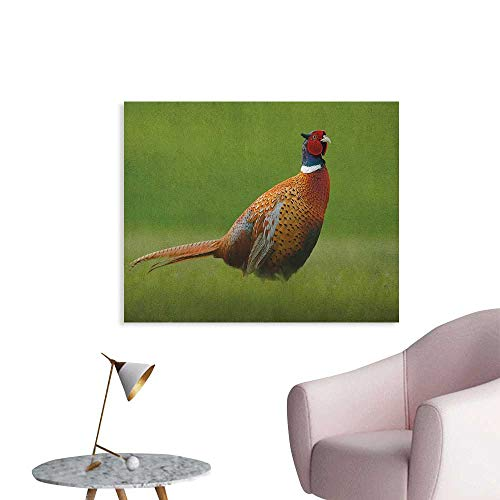 (Anzhutwelve Bird Wall Picture Decoration Common Pheasant with Long Tail on The Green Grass Meadow Habitat Czech Republic Poster Print Green Orange Red W48 xL32)
