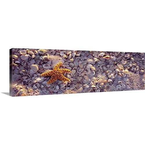 GREATBIGCANVAS Gallery-Wrapped Canvas Entitled Starfish on The Beach, Lovers Key State Park, Fort Myers Beach, Gulf of Mexico, Florida by 60