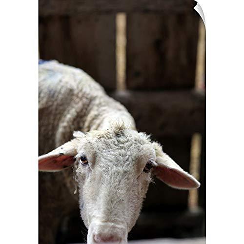 - CANVAS ON DEMAND Hello Mama Sheep Wall Peel Art Print, 24