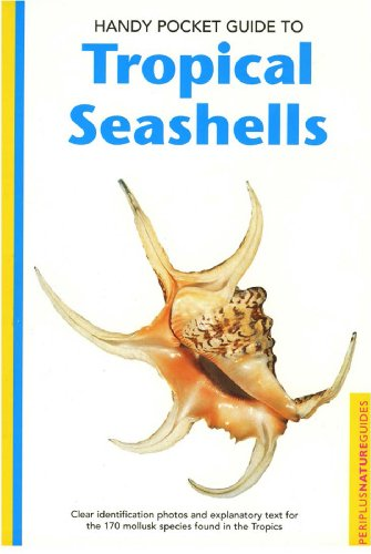 Tropical Antique Shell - 3