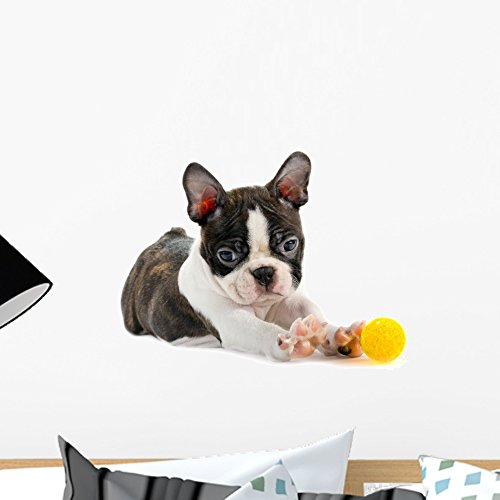 Wallmonkeys Boston Terrier Puppy Wall Decal Peel and Stick Graphic WM159765 (18 in W x 12 in H) ()
