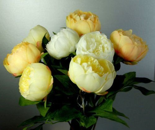 Eight-Stems-of-Artificial-Silk-Cream-Yellow-and-Apricot-Peonies-by-CB-Imports