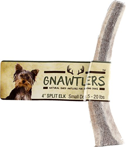 Small Antler (Gnawtlers - Premium Split Elk Antlers For Dogs, Naturally Shed Elk Antler Split, All Natural Split Elk Antler Chews, Specially Selected From Rocky Mountain & Heartland Regions - 4