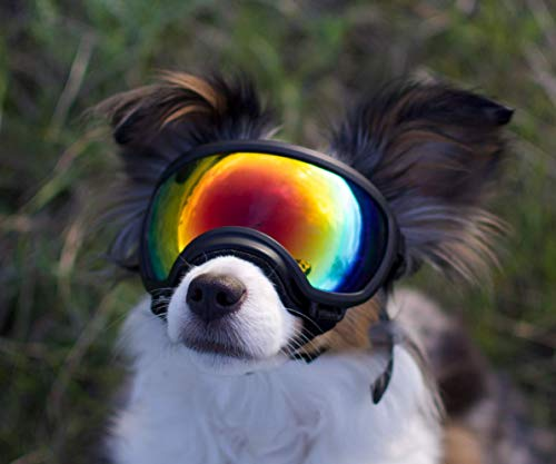 Rex Specs Dog Goggles - Eye Protection for The Active ()
