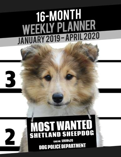 (2019-2020 Weekly Planner - Most Wanted Shetland Sheepdog (Sheltie): Daily Diary Monthly Yearly Calendar Large 8.5