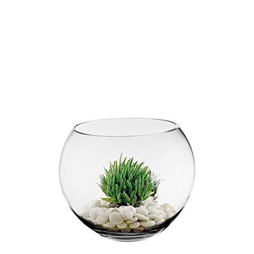 CYS-Glass-Bubble-Bowl-Fish-Bowl-Hand-Blown-Glass-Body-D-6