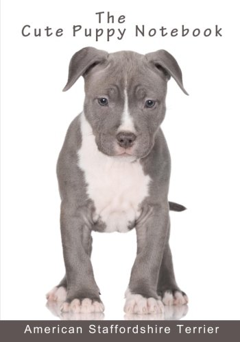 American Staffordshire Terrier Dogs - 9