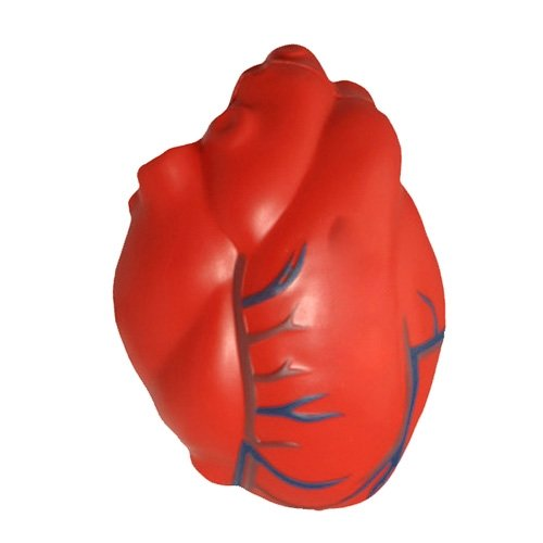 Heart Shaped Stress Ball - Heart with Veins Stress Toy