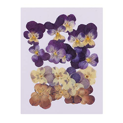 SM SunniMix Beautiful Natural Pressed Dried Flowers Pressed Violet for Scrapbooking Art Craft Epoxy Resin Pendant Jewelry Making DIY Accessories - Pack 20