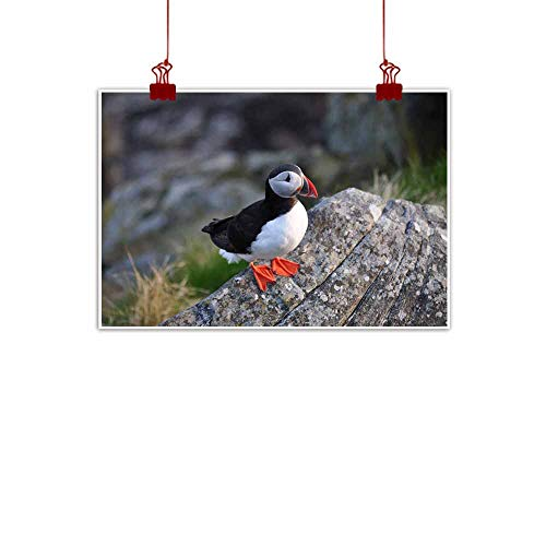 duommhome Modern Frameless Painting Puffin Natural Art 28
