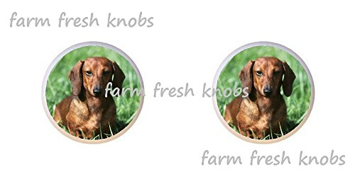SET OF 2 KNOBS - Red Smooth Coat Dachshund Dog - Dogs - DECORATIVE Glossy CERAMIC Cupboard Cabinet PULLS Dresser Drawer KNOBS