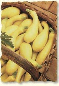 David's Garden Seeds Squash Summer Dixie DGS299OG (Yellow) 50 Hybrid Seeds