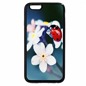 iPhone 6S / iPhone 6 Case (Black) Ladybug on Tender Buds