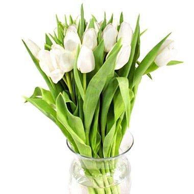 Tulips, White (100 stems) by Freshflowers