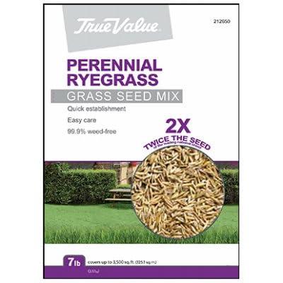 Barenbrug USA TVPRG7 Tv 7 lb Peren Rye Seed : Garden & Outdoor