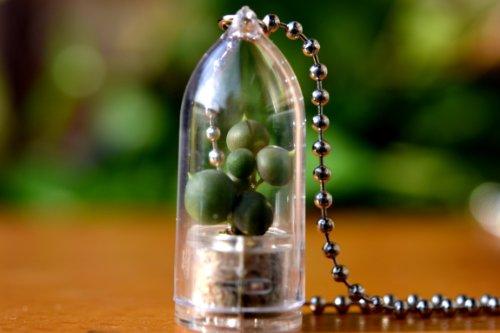 Pearl Princess Succulent Necklace Terrarium