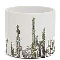 Accents de Ville Cactus Field Design Plant Pot - 4.75 Ceramic Pot - Modern Desert Decor - Chic Indoor Planter