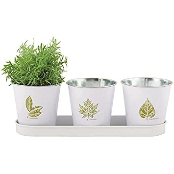 Fallen Fruits 3 Leaf Collection Windowsill Herb Pots In A Tray