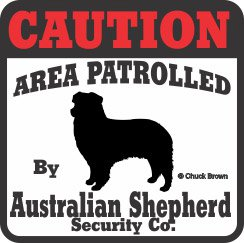 (Australian Shepherd Bumper Sticker Caution)