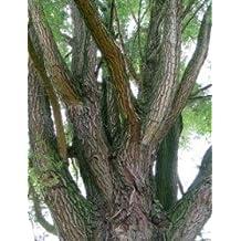 Willow Bark White, Powder- Wildcrafted - Salix alba (454g = One Pound) Brand: Herbies Herbs