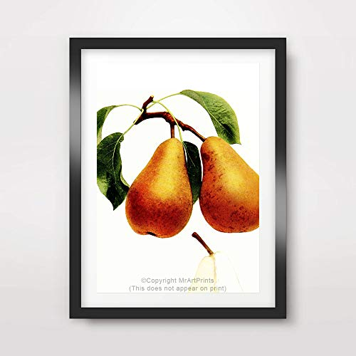 PEAR FRUIT LEAVES MODERN CONTEMPORARY PHOTOGRAPH ART PRINT Poster Kitchen Home Decor Room Wall Picture A4 A3 A2 (10 Size Options)
