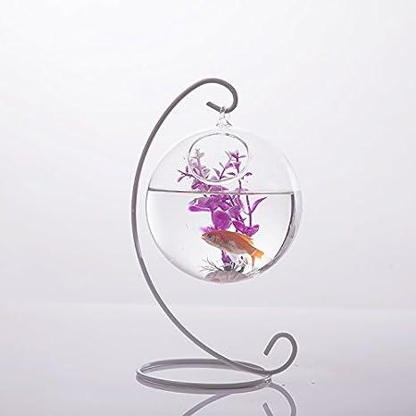 Amazon.com: Homyl Clear Ball Shape Glass Flower Planter Vase Container Fish Tank Home Decor: Home & Kitchen