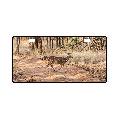 - INTERESTPRINT Chital or Cheetal Spotted Deer in Bandhavgarh National Park in India Metal License Plate for Car, Metal Auto Tag for Woman Man, 11.8 x 6.1 Inch