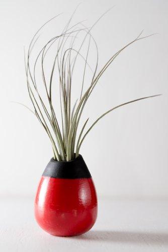 Hinterland Trading Jucifolia Sizzling Ceramic