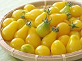Tomato Yellow Pear Great Heirloom Garden Vegetable Seeds by Seed Kingdom (200 Seeds)