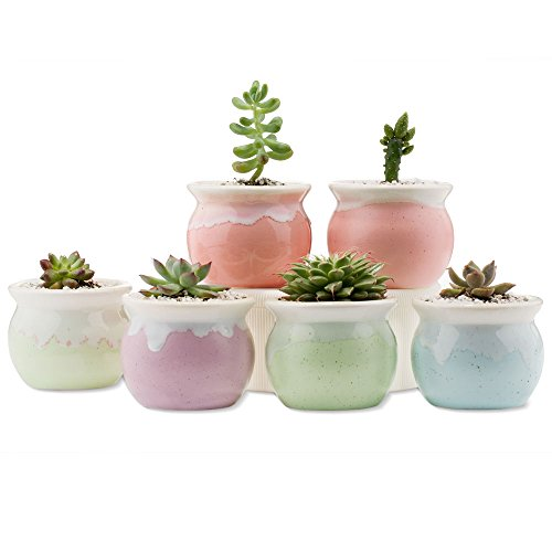 Ceramic Plant Pots Indoor: Amazon.com