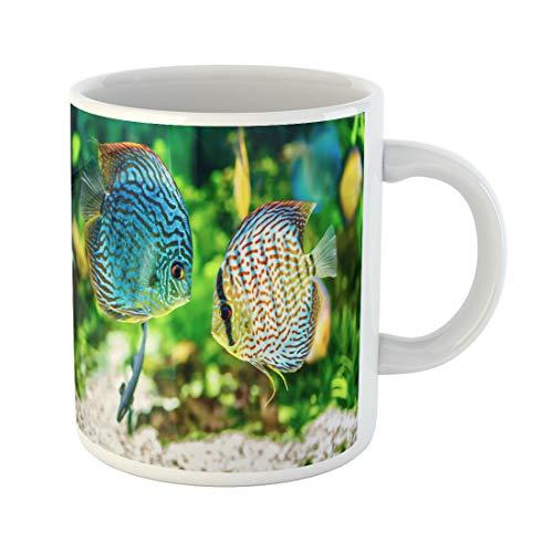 - Semtomn Funny Coffee Mug Blue Fish Symphysodon Discus in Aquarium on Green Colorful 11 Oz Ceramic Coffee Mugs Tea Cup Best Gift Or Souvenir