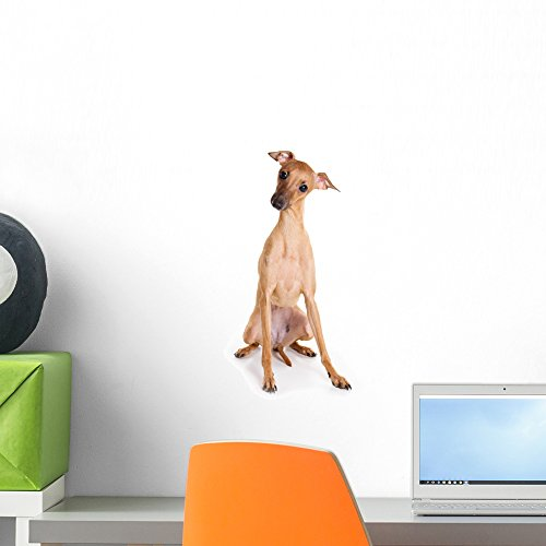 Italian Greyhound Puppies - Italian Greyhound Puppy White Wall Decal by Wallmonkeys Peel and Stick Graphic (