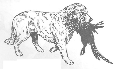 Dog Rubber Stamps - Golden Retriever-8F Size: 2-3/4