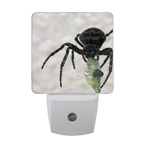 Spider Victim Food Plug-in Night Lights, Warm White LED Nightlight, Dusk to Dawn Sensor, Kids, Adult, Bedroom, Hallway, Bathroom,Kitchen, -