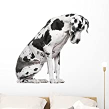 Great Dane Harlequin Sitting Wall Decal by Wallmonkeys Peel and Stick Graphic (36 in W x 33 in H) WM224649