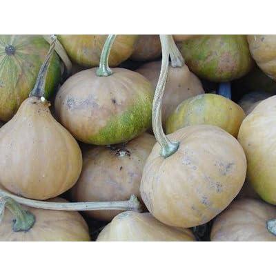 Legend Online Garden Seeds Pumpkin Seminole (Baking) (Orange) 25 Organic Seeds: Grocery & Gourmet Food